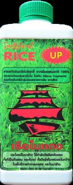 riceUP-หน้า
