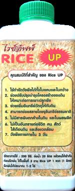 riceUP-หลัง